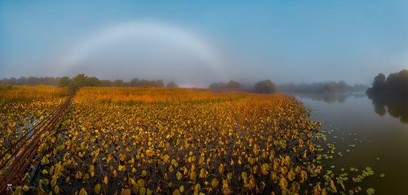 астраханская область, река, вода, волга, заповедник, астраханский государственный биосферный заповедник, осень, радуга, туман, белая радуга, лотос, поле, тропа, рассвет, ясный день, pentax645z, pentax, Туманная радуга над осенним полем лотосовphoto preview