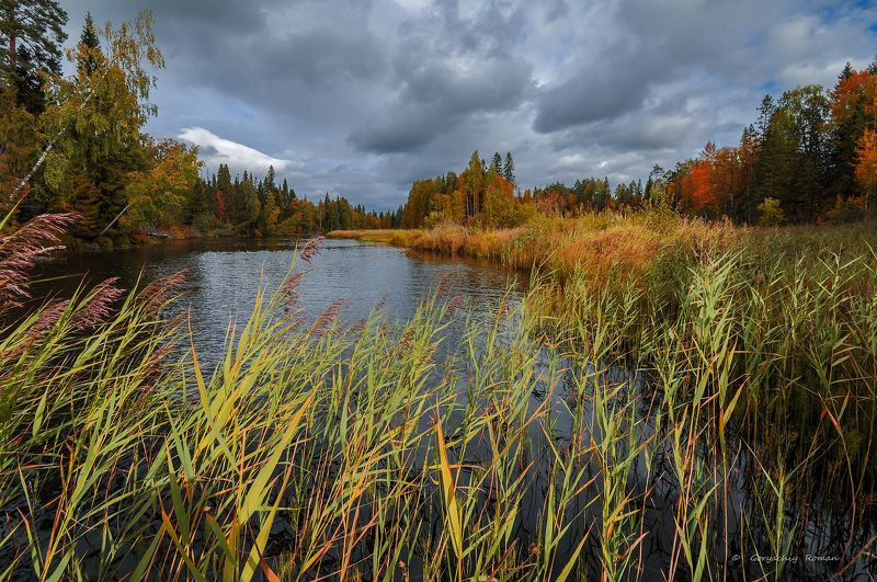 великий двор, вологодчина, кема,север, осень, река, лес Осенняя Кема.photo preview