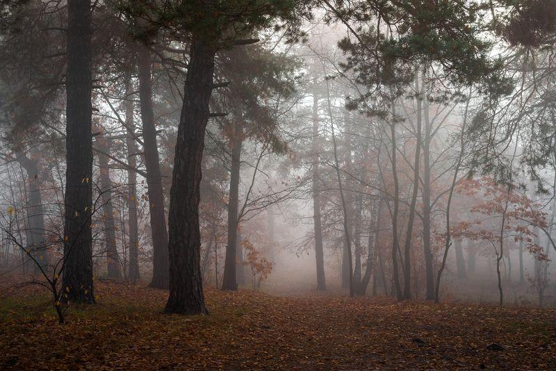 лес, осень, ноябрь, туман С белою фатою осень к нам пришлаphoto preview
