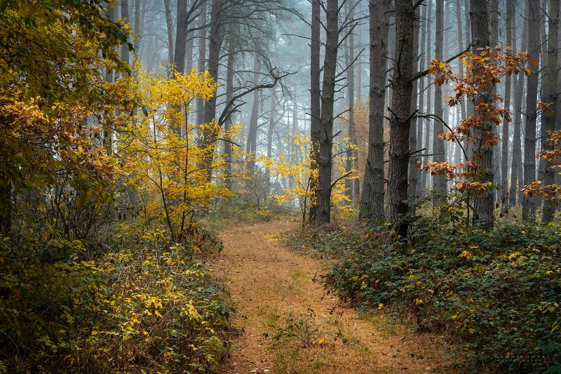 walk forest autumn trees fall magic mist foggy path dranikowski road Walk in the forestphoto preview