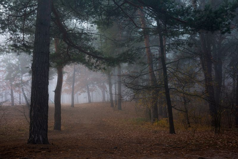 лес, осень, ноябрь, туман Туман холодный обнимает, святую тишину храняphoto preview