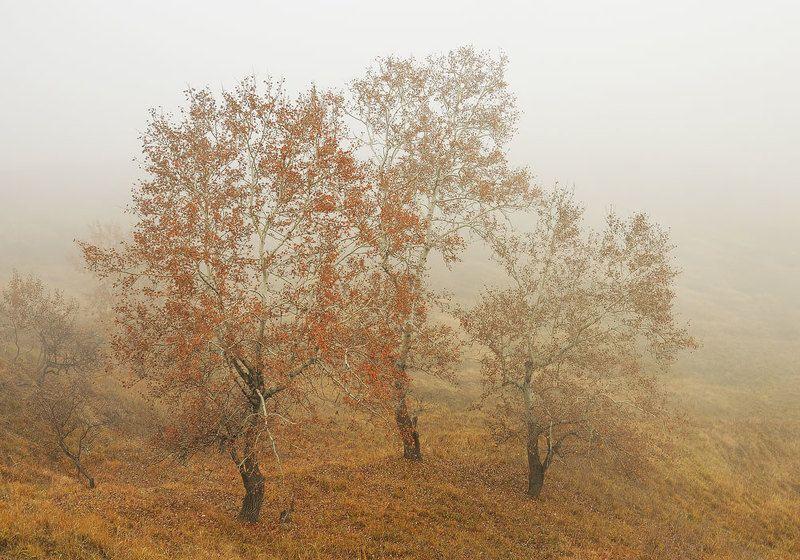 Autumn 2015photo preview
