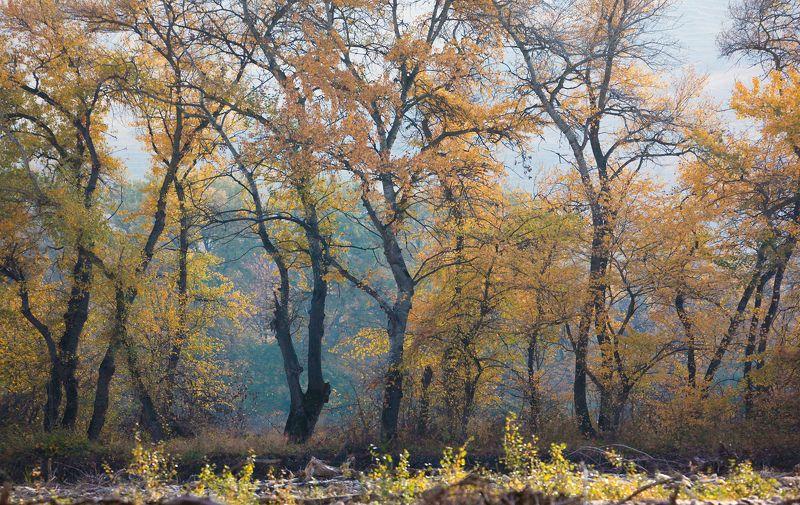 осень,деревья,день,пейзаж Осенний лес..photo preview