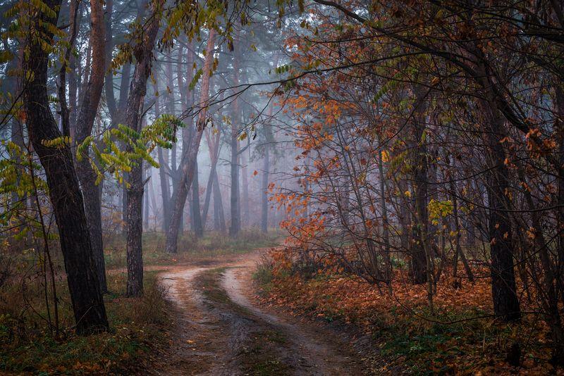 лес, осень, ноябрь, туман За белым туманом приходит зима...photo preview