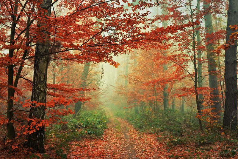 red forest trees magic mist path foggy road las dranikowski fall autumn walk Red Forestphoto preview