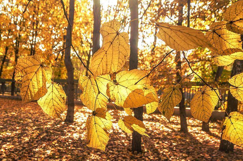 портрет осенних листьев,,photo preview