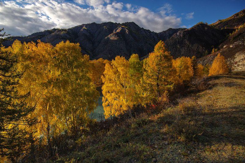 осень, вечер, желтое, деревья, река, чуя, валерий_чичкин, свет, вода, горы, сибирь В вечернем свете золотомphoto preview