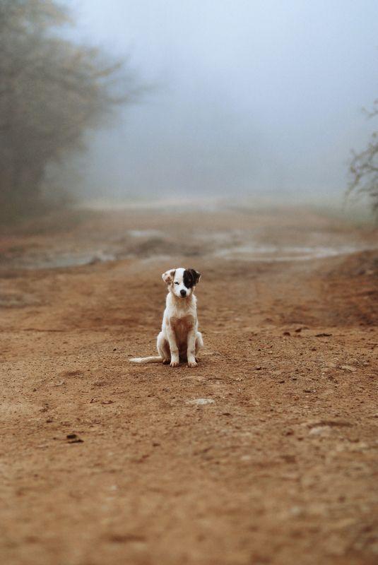 Портрет одинокого щенка в туманеphoto preview