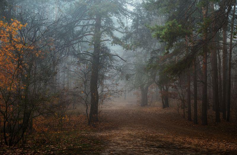 лес, осень, ноябрь, туман Холодно стало и птицы уже не поютphoto preview