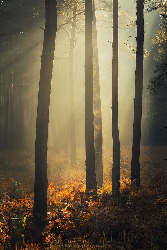 forest, poland, polish, landscape, mushroom, trees, light, awesome, shadows, fog, mist, beautiful, breathe, autumn The forest breathed with mephoto preview