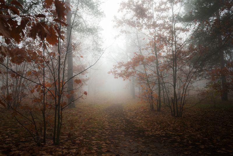 лес, осень, ноябрь, туман, белый Растворяясь в реальностиphoto preview
