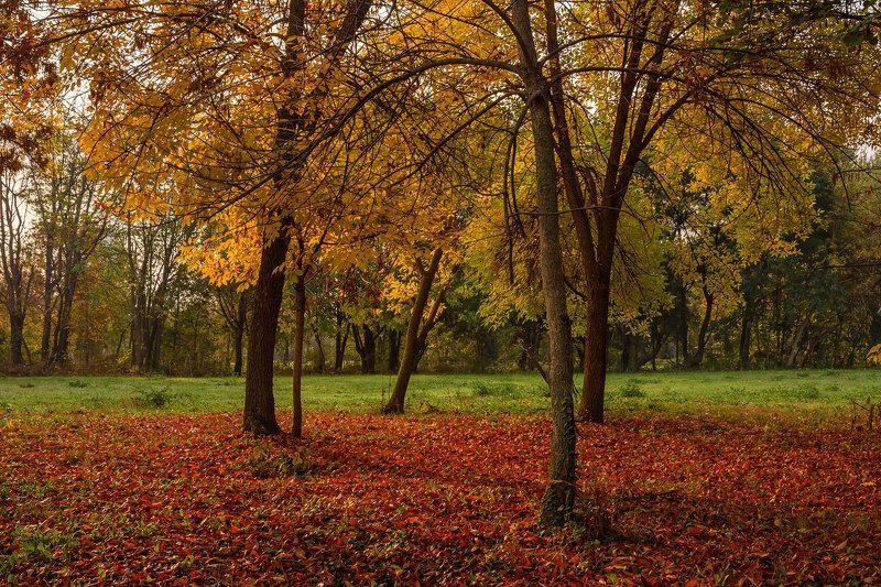 осень красный желтый зеленый деревья листья кроны Красный, жёлтый, зелёныйphoto preview