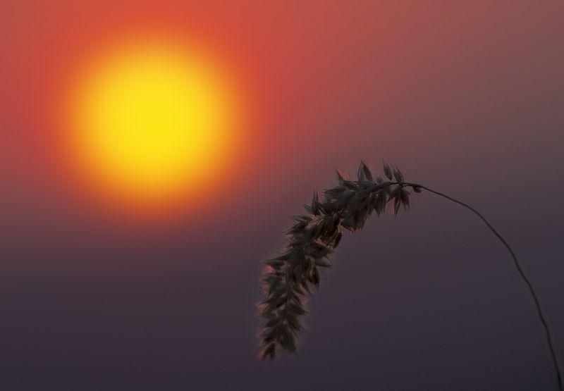 кавказ, машук, закат, лето Колосокphoto preview