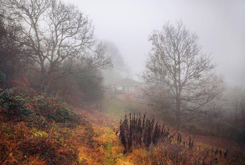осень,природа,село,туман Сумерки..photo preview