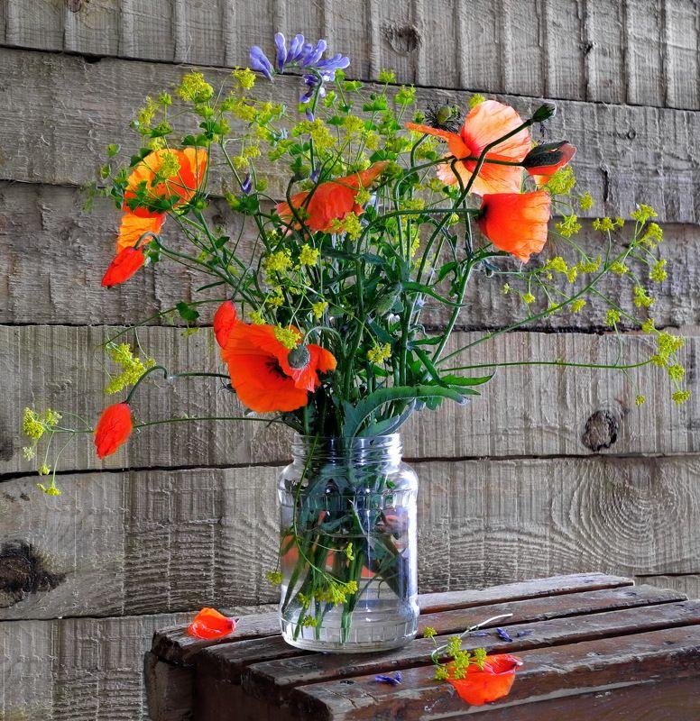 цветы маки букет Полевые цветы.photo preview