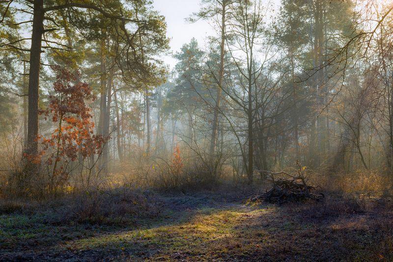 лес, осень, ноябрь, туман, свет, лучи Протекая сквозь ветвиphoto preview