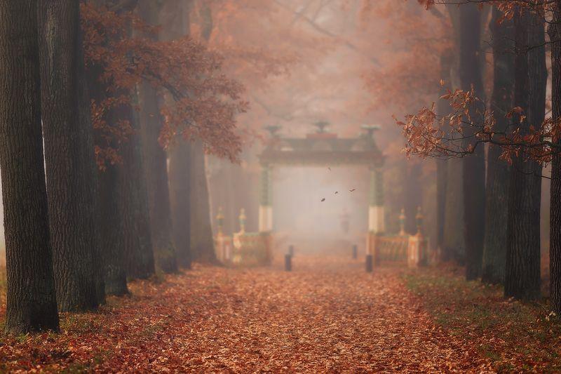 питер, пушкин, царскоесело, царское, александровскийпарк Осенний сон...photo preview
