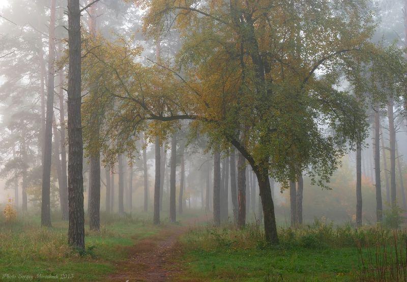 пейзаж, природа, лес, октябрь осень, туман, утро, украина Туманный октябрьphoto preview