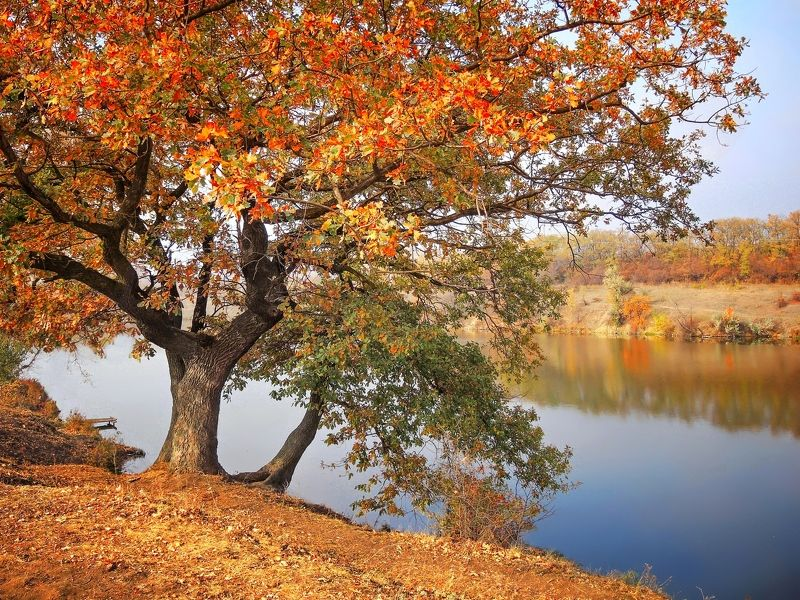 Осенние берегаphoto preview