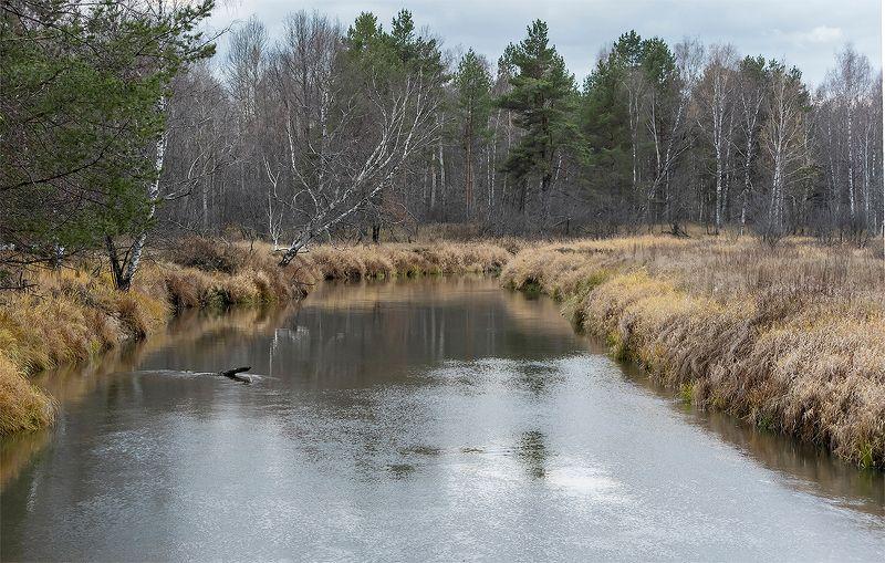 осень, времена года, лесная река, река, лето, весна, зима, мещёра, рязанская область Назад в весну! ... и обратно)photo preview
