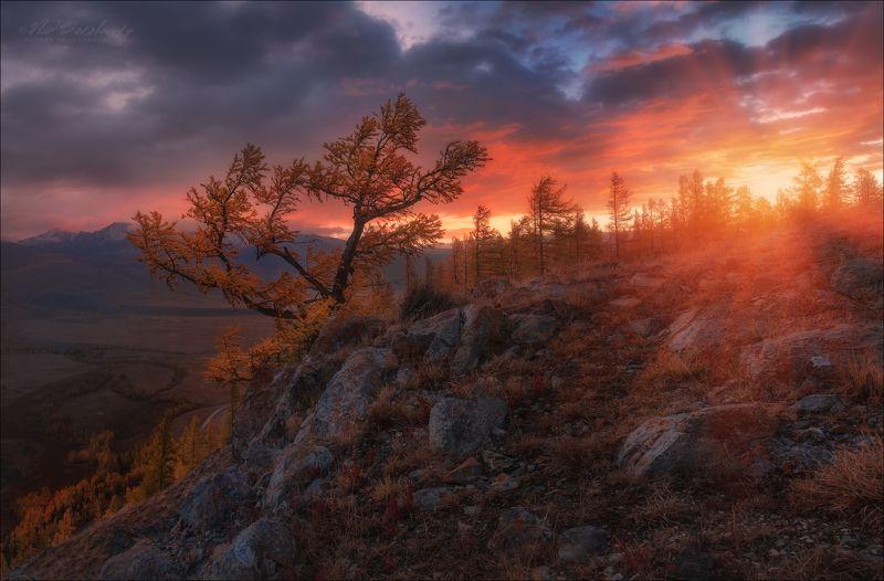 алтай, курай, курайская степь, осень, счх, северо-чуйский хребет, курайский хребет Пожар осеннего заката .. фото превью