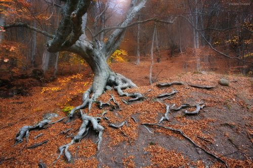 Лесной стражник