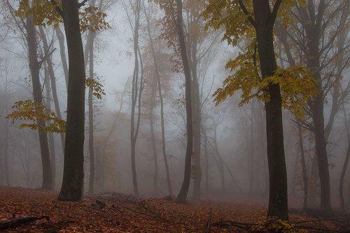Осенняя Кизиловка