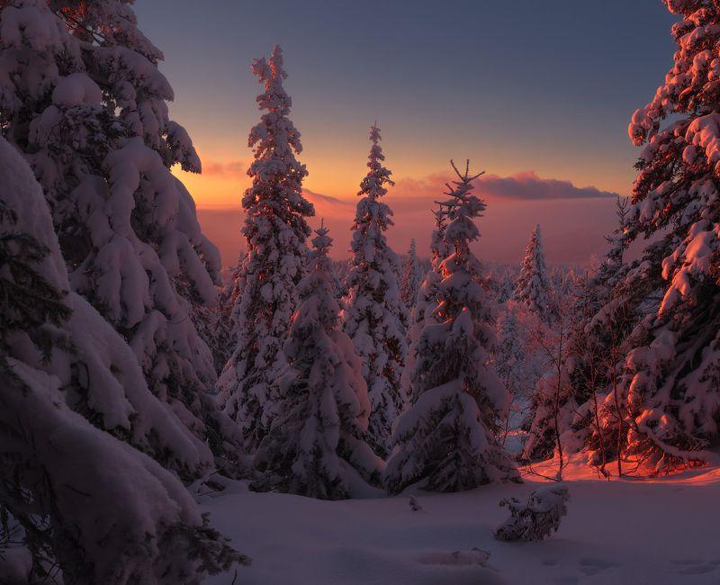 Легенды зимнего леса фото превью