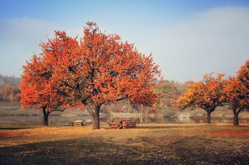 Осень на привалеphoto preview