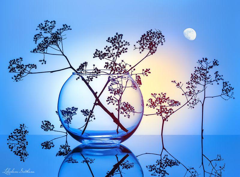 соцветия,растения,силуэты,стекло,стеклянные,прозрачные,рыбки,стрекоза,чёрно-белое,серое Силуэтыphoto preview