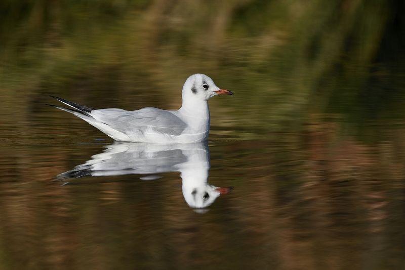 птицы birds Oтражение 1photo preview