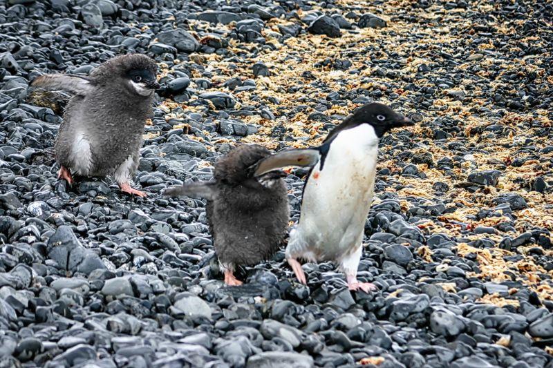 Антарктида 17photo preview