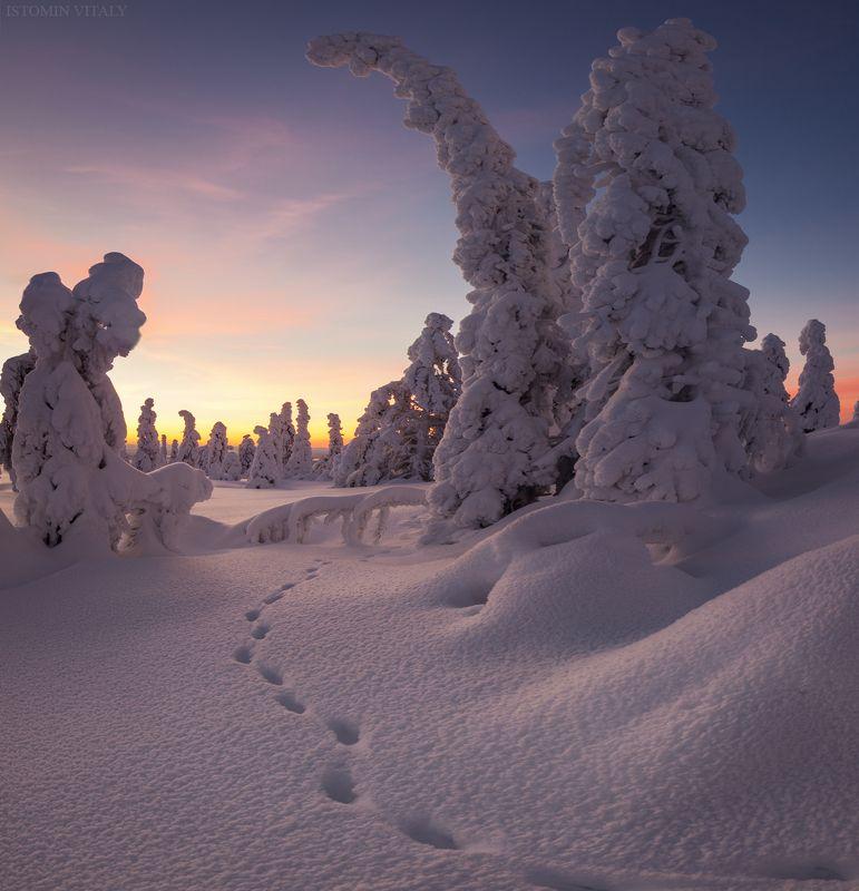 пейзаж,зима,россия,кандалакша,кольский,север,лес,следы,природа,закат По следамphoto preview