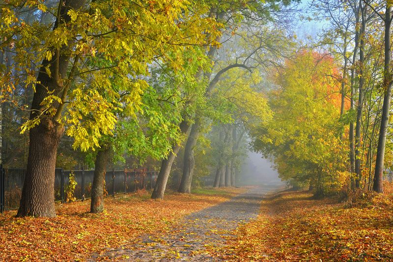 autumn road fall path mist foggy trees dranikowski walk park Autumn roadphoto preview