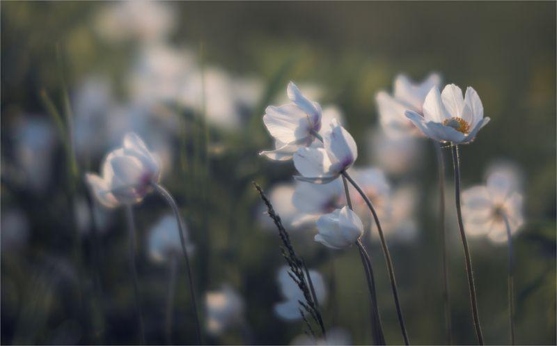 нежность весны...photo preview