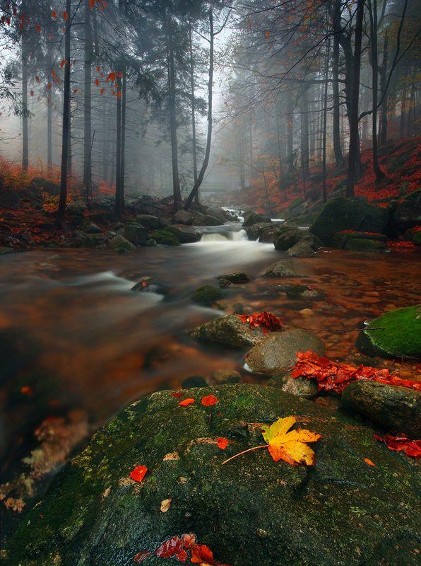 Autumn moodphoto preview