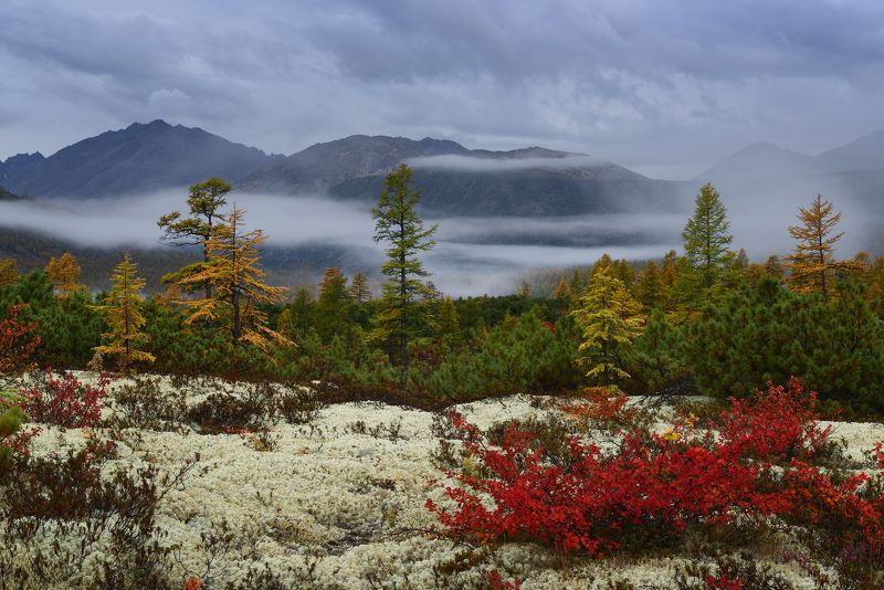 Колымские туманы...photo preview