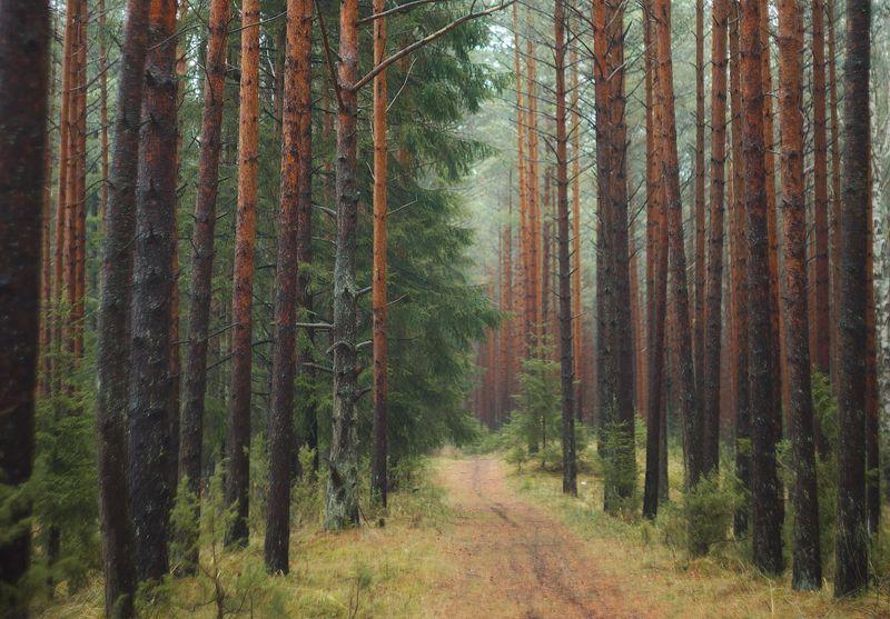 ноябрь, лес, осень Ноябрьphoto preview