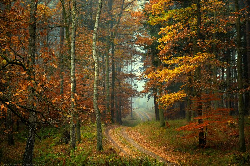 forest road path magic mist dranikowski autumn fall walk foggy droga туман trees Forest roadphoto preview