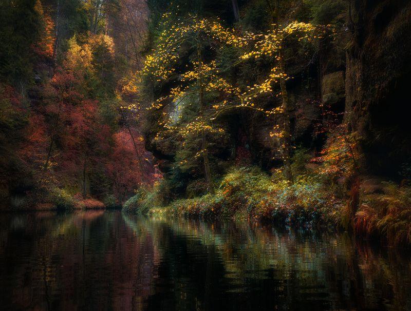Осень, деревья, скалы, вода, ручей Волшебство поздней осениphoto preview