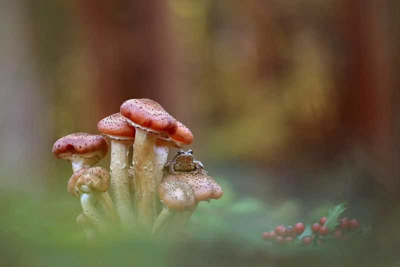 Лес,осень,грибы. Опята.photo preview