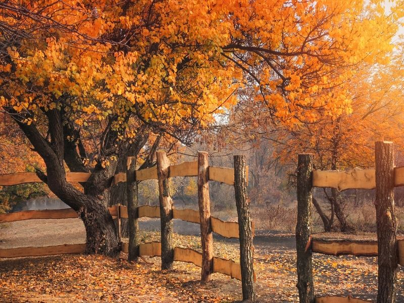 За околицей осеньphoto preview