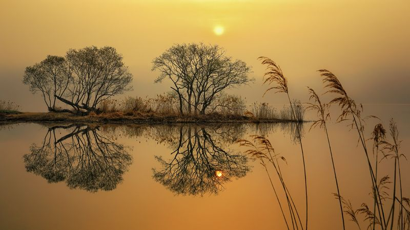 reflection, tree, sunrise, winter, water, riverside, river, morning, landscape garden of waterphoto preview