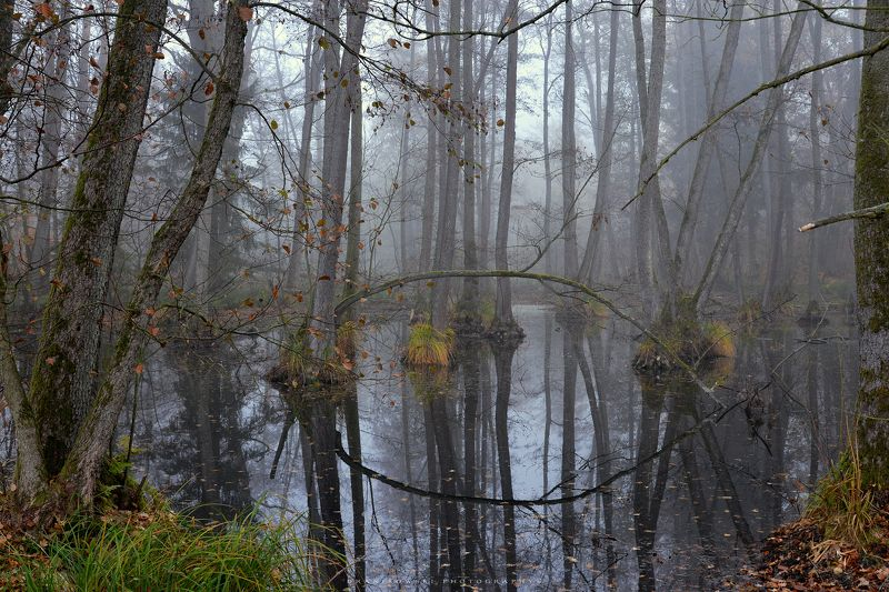 лесные болота forest swamps dranikowski autumn fall magic mist foggy morning lake trees water лесные болотаphoto preview