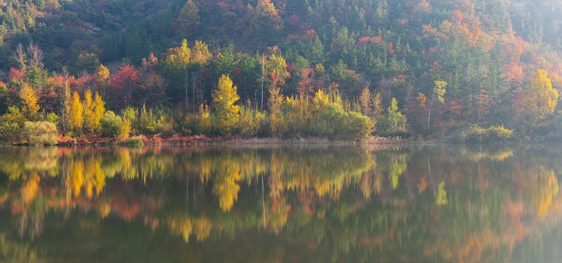 reflections, autumn, natural light, trees Autumn legacyphoto preview