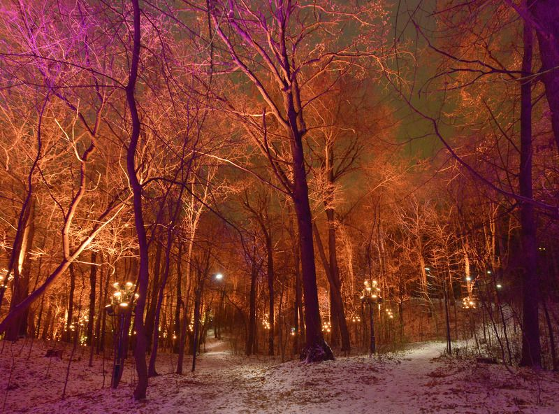 Заколдованый лес Воробьёвых горphoto preview