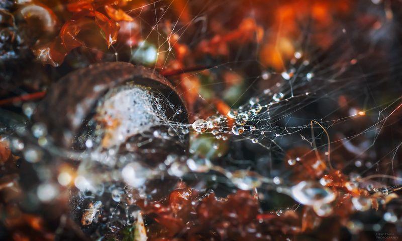 макро, природа, лес, мох, паутина, капли, желудь, macro, nature, forest, moss, cobweb, drops, acorn, Лесные силкиphoto preview