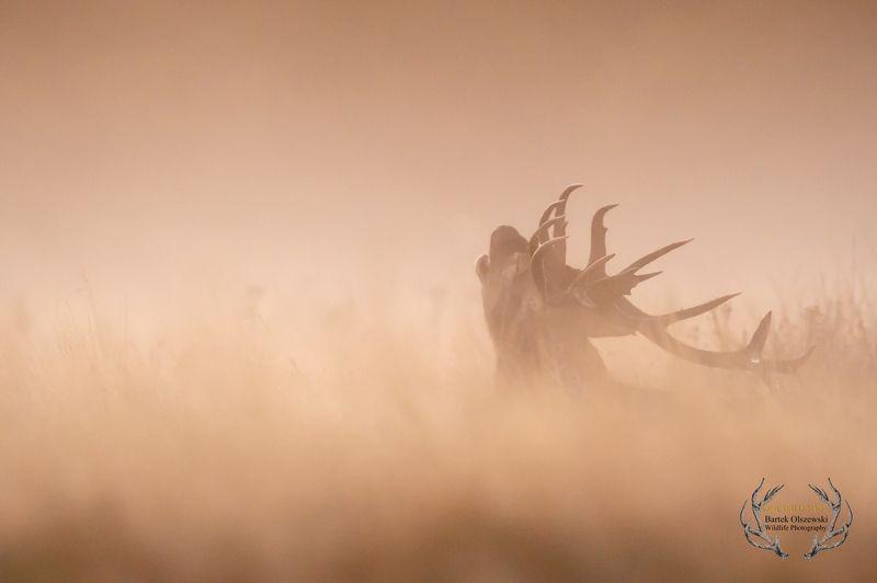 #deer #nature #wildlife #animals #mammals #zwierzeta #jelen   Red Deerphoto preview