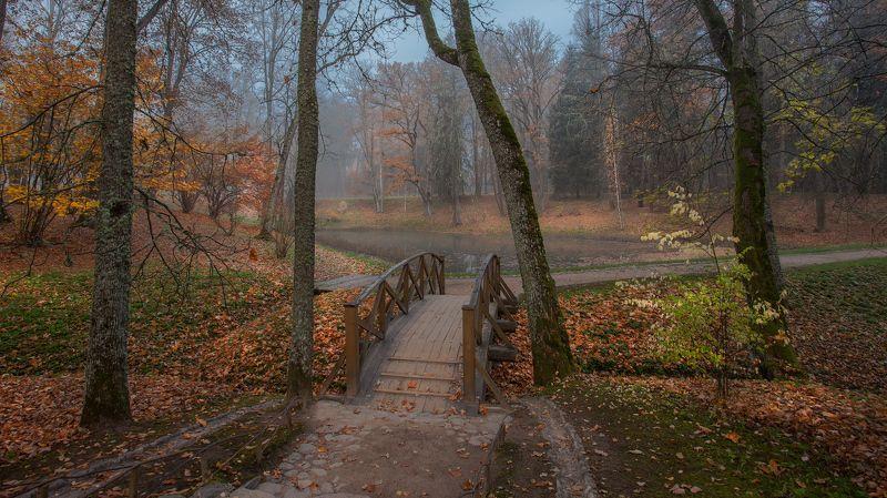 Тригорское, Псковская обл., октябрь, утро. Осень, я давно с тобою не был...photo preview