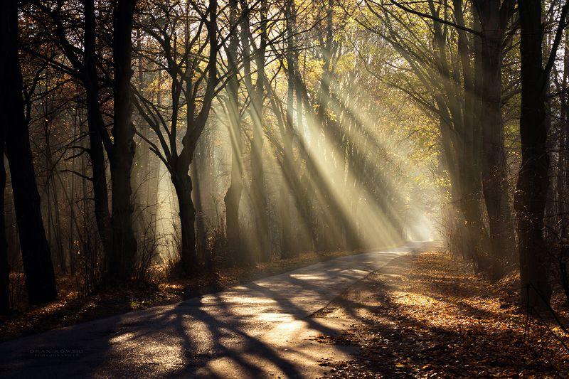 sun rays shining through trees road mist path foggy magic dranikowski autumn light beams Sun rays shining through treesphoto preview